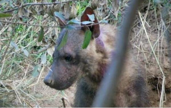 Cuối cùng 3 mẹ con linh cẩu đã được các thành viên nhóm quỹ cứu trợđộng vật cứu sống.