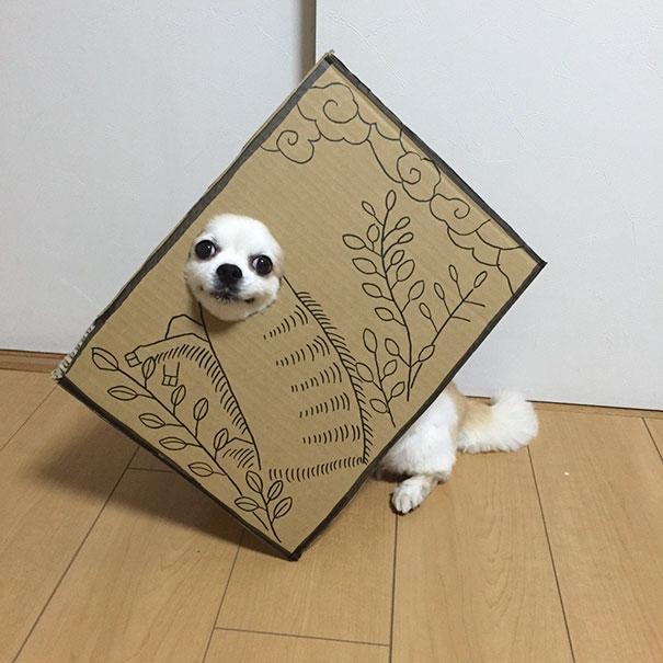 Chú chó tỏ ra rất yêu thích công việc làm mẫu cosplay này.