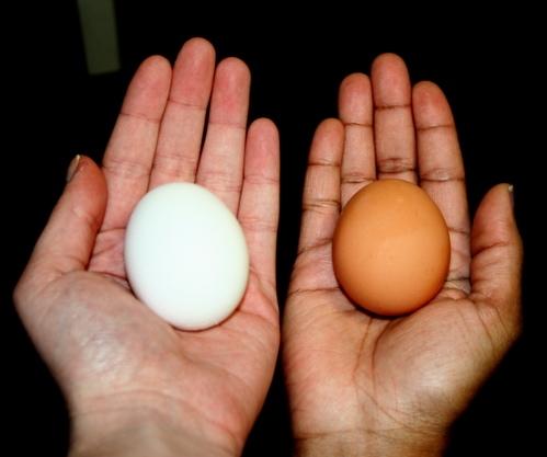 Chế độ ăn uống của gà đóng vai trò quan trọng với chất lượng của trứng.