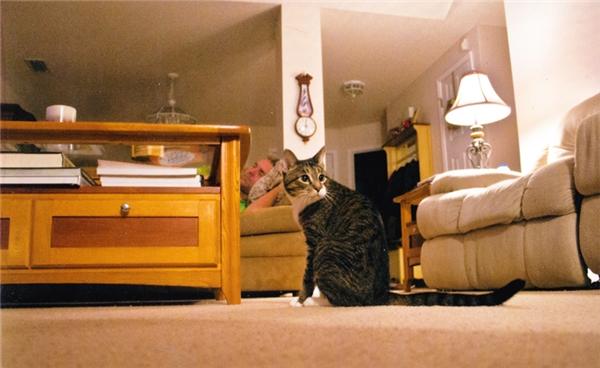 Bức ảnh vô tình của người bố khi người con chụp hình cho con mèo. Ngày hôm sau ông qua đời vì một cơn trụy tim.