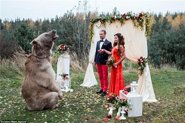 Ngỡ ngàng đám cưới có chủ hôn là một chú gấu khổng lồ
