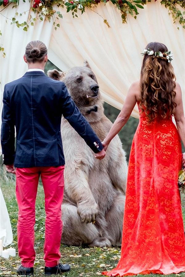 Chú gấu Stepan làm chủ hôn cho hôn lễ củaDenis và Nelya.