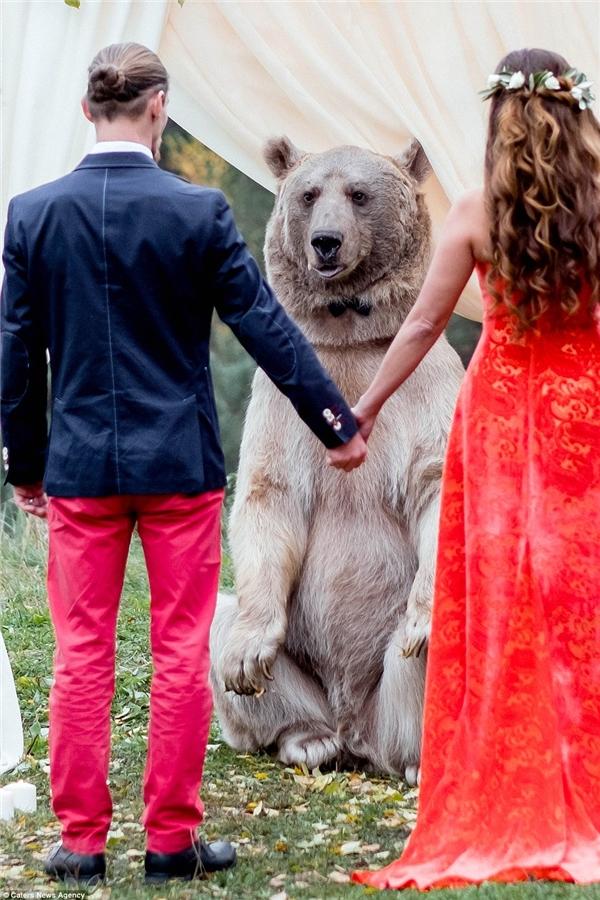 Đám cưới cùng chú gấu là một trải nghiệm vô cùng đặc biệt với cặp đôiDenis và Nelya.