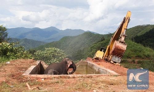Một hố lớn được đào cạnh hồ để giảicứu gia đình voi.