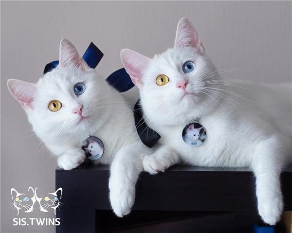 Cặp song sinh này có mắt màu xanh lam và màu nâu vàng. (Ảnh: Internet)