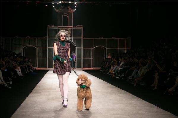 """Chi Pu đội tóc giả, dắt cún Poodle """"dạo chơi"""" trên sàn catwalk"""