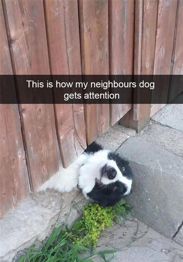 Boss nhà hàng xóm muốn được chú ý.(Ảnh: Internet)