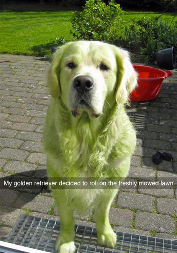 """Hôm qua ai đồn tóc màu xanh lá mới lá """"mốt"""", thế là hôm nay boss nhà em đã...(Ảnh: Internet)"""