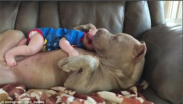 Cả cậu bé Stone và chú chóBelle đều tỏ ra vô cùng thích thú khi được ở cạnh nhau.
