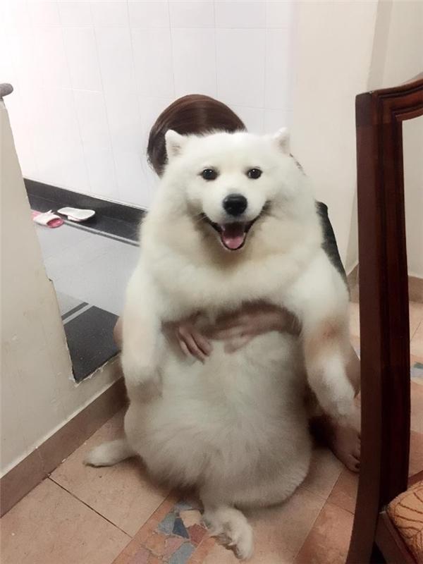 Đã hói lại còn chân ngắn, đây là chú chó đang