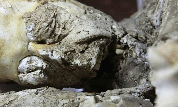 Khối hóa thạch một người đang ở trong cảnh bàng hoàng khiếp sợ, mắt mở to và miệng còn đang há ra chưa kịp khép lại.