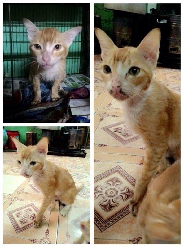 Rớt nước mắt câu chuyện bình phục của chú mèo bị đánh đến động kinh