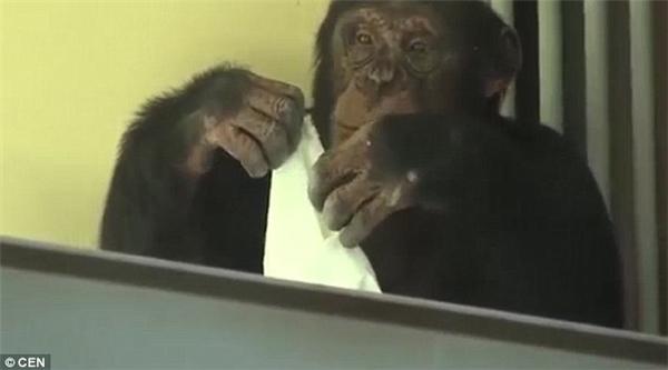 Elya tỏ ra rất chăm chú vớicông việc lau cửa kính của mình