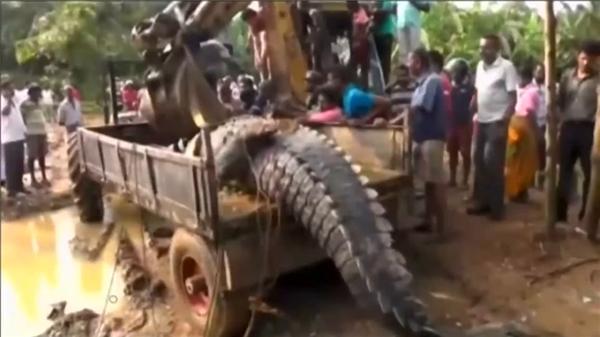 """Phát hoảng khi tìm thấy cá sấu khổng lồ """"trốn"""" gần khu vui chơi trẻ em"""