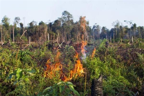 """Hàng triệu héc-ta rừng nhiệt đới đang từng ngày bị """"giết"""" chết bởi ngọn lửa đầy hung hãn. (Ảnh: Internet)"""