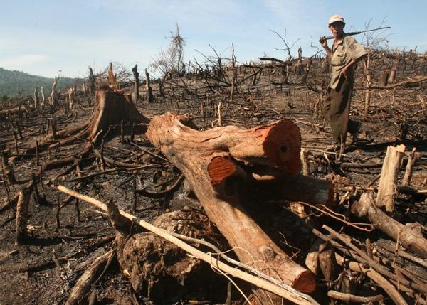 Cô bé viết về vấn nạn rừng cây bị tàn phá, về ruộng đồng bị nhuốm thuốc trừ sâu.(Ảnh: Internet)