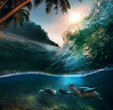 Cặp rùa biển đang bơi lặn dưới biểnMaldives.