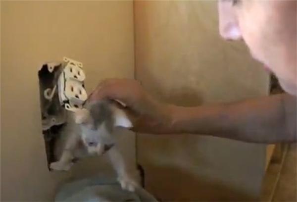 Họ nhanh chóng giải cứu chú mèo tội nghiệp ra khỏi ổ điện bằng cách cắt và tháo dỡ một phần tường ra.