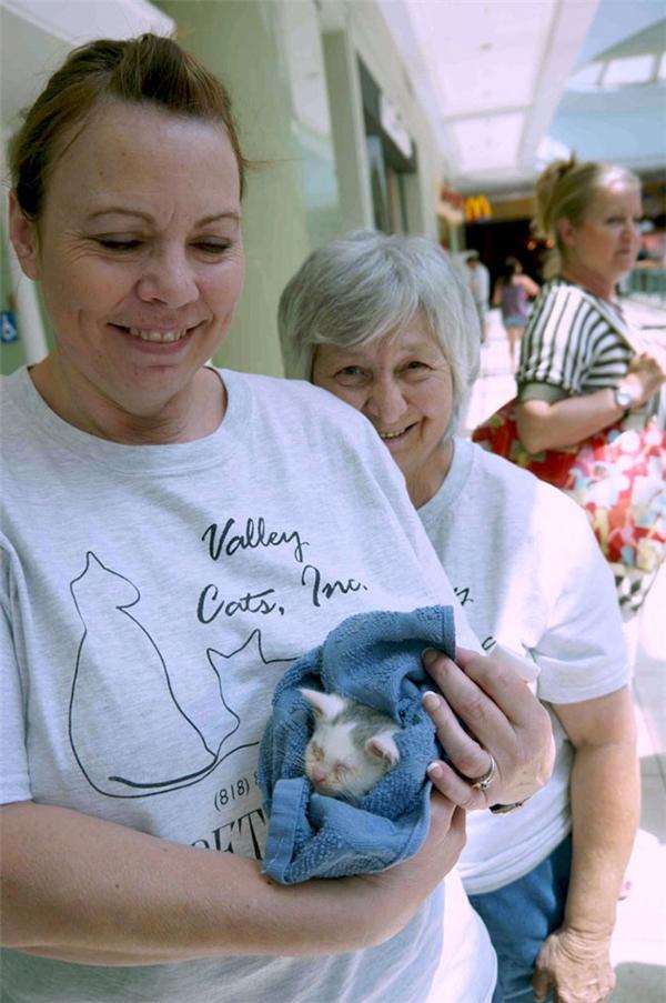 Hiện Valentino đang được nuôi dưỡng tại một trung tâm cứu trợ động vật.