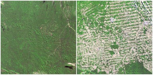 Những khu rừng ởRondonia, Brazil (06/1975 - 08/2009)