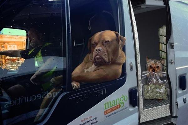 TrôngRoxychẳng khác nào một bà chủ oai vệ, còn cô nàng chó đằng sau phải chăng là nhân viên giao nhận hàng?(Ảnh: Internet)