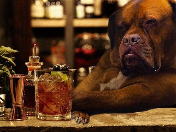 """Mặt sầu đời như thế này thì phải ngồi nhâm nhi li rượu trong quán bar mới """"đúng chuẩn"""".(Ảnh: Internet)"""