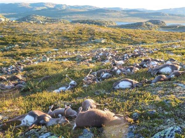 Chúng chết đói bởi không thể tìm thấy thức ăn khi đông về.