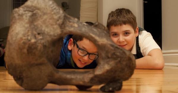 Đốt xương voi răng mấu mà hai cậu bé tình cờ đào được.