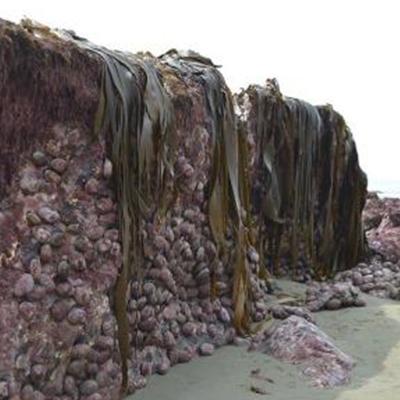 Những tảng đá nổi lên bám đầy rong rêu.(Ảnh: Twitter TonkinTaylor)