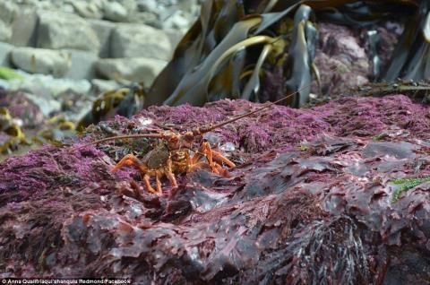 Một số loài thủy sảnbị hất lên bờ (Ảnh:Anna Redmond).