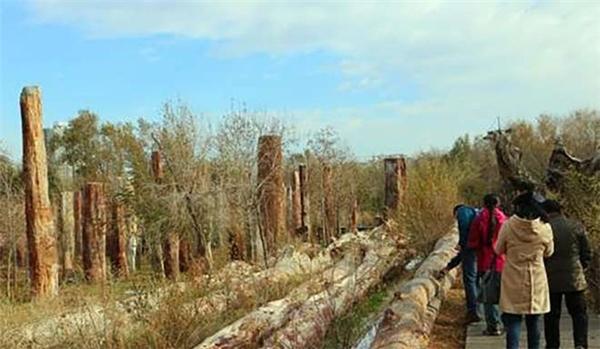 Thân cây hóa thạch thu hút sự quan tâmchú ý của rất nhiều người.