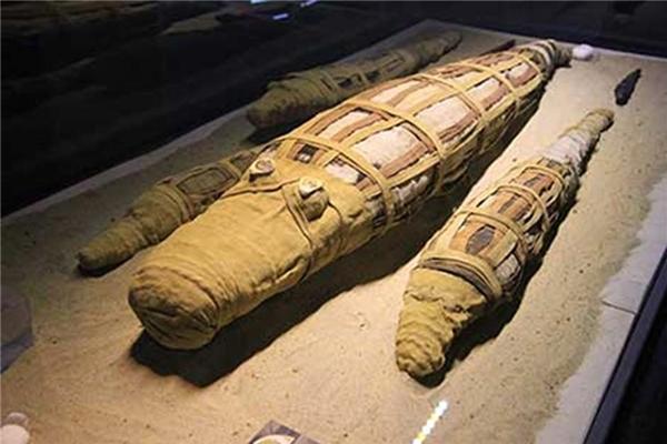 Xác ướp cá sấu được tìm thấy ở đền thờ Sobek