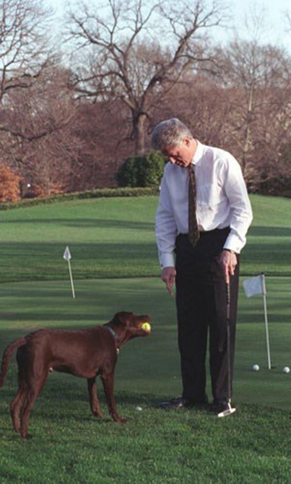 Tổng thống Bill Clinton vui vẻ chơi golf với chú chó Buddy.
