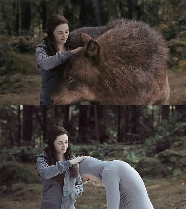 Nàng Bellavuốt ve đầu của một diễn viên đóng thế và tưởng tượng ra bộ lông ấm áp của cậu bạn Jacob trong phimNew Moon.