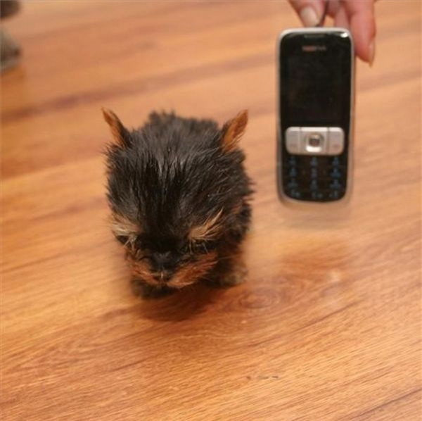Con chuột này trông ngộ ghê.