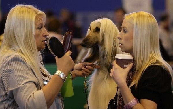 Nhìn bộ lông là biết chó nhà ai đi lạc. (Ảnh: Internet)
