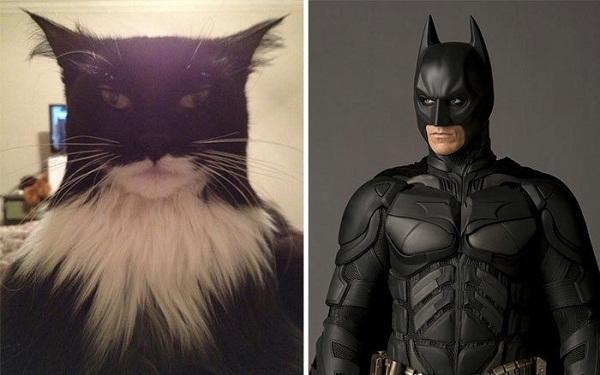 Batman phiên bản mèo đã xuất hiện với nhiệm vụ giải cứu thế giới khỏi lũ chuột. (Ảnh: Internet)