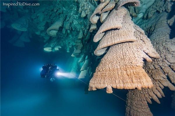 Thay vì có hình chông nhọn hoắt như bình thường, các cột nhũ đá ở trần hang động lại có xu hướng phát triển ngược lại với phần đầu nhọn, phía dưới rủ xuống và loe dần theo hình vòng, nhìn qua như những chùm chuông khổng lồ.
