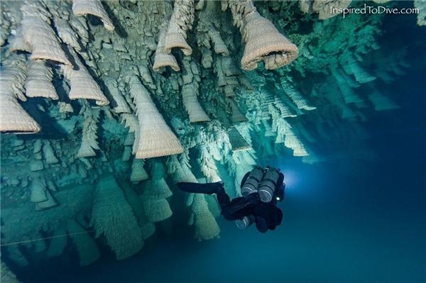 Chính vì hình thù kì lạ hiếm gặp này mà hang động ngập nước ở bán đảo Yucatan, Mexico đã trở nên nổi tiếng.