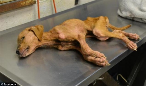 Xena đã từng suýt chết vì bị nhốt trong lồng và bịbỏ đói.