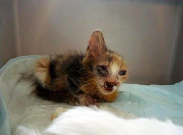 Chú mèo được cô bé tìm thấy khi đang thoi thóp vì kiệt sức trong khe hở của các thùng rác trên đường phố. (Ảnh: Internet)
