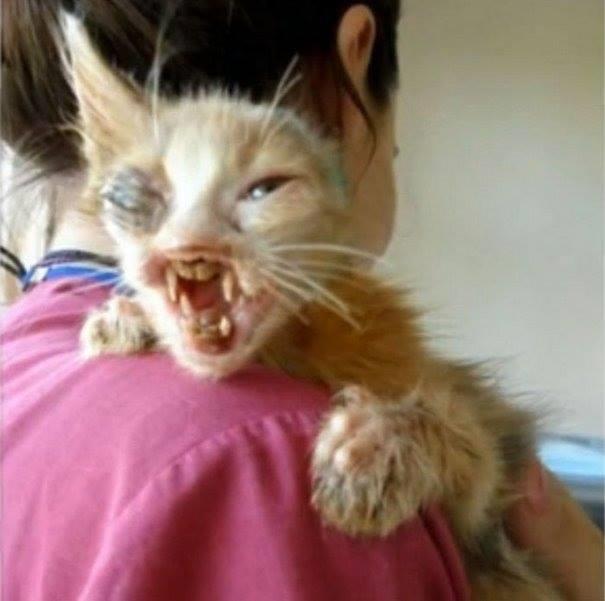 Cảm động với những gì cô bé 7 tuổi đã làm cho chú mèo xấu xí này