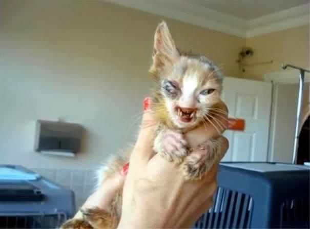 Ngay sau khi mang chú mèo đi, cô bé đã cầu cứu sự giúp đỡ từ cha mình. Và họ đã đưa chú mèo đến ngay trạm thú y gần nhấtđể cấp cứu. (Ảnh: Internet)