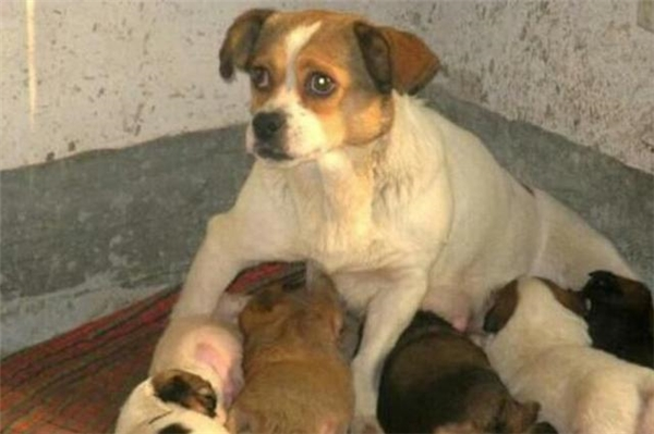 Một gia đình tốt bụng đã đưa mẹ con nhà chó về nuôi. (Ảnh: Internet)