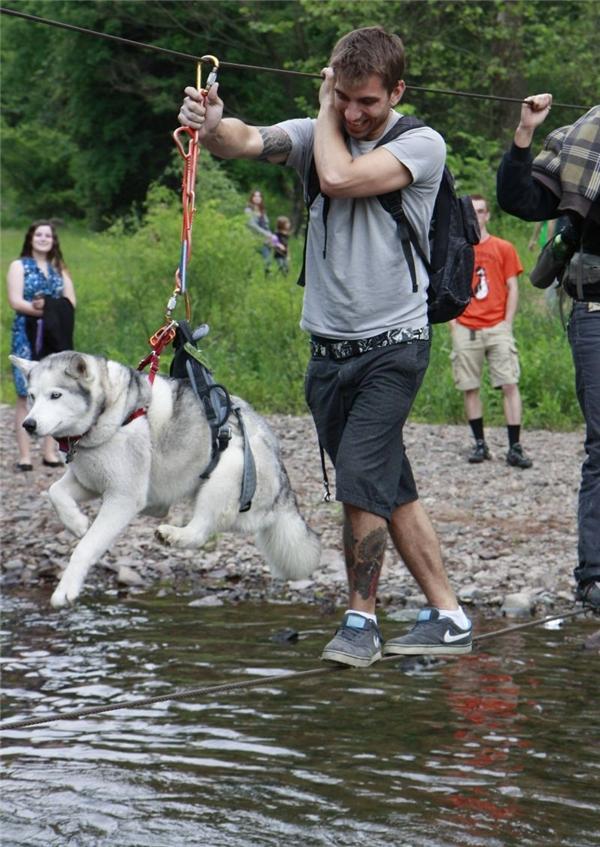 Cách duy nhất để vận chuyển một husky sang sông mà không làm nó sợ bỏ trốn mất.