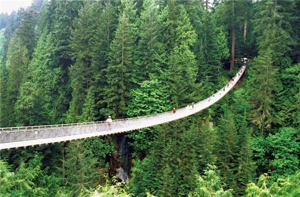 Đi trên cây cầu nằm giữa bốn bề xanh biếc của thiên nhiên Vancouver, British Columbia, Canada cũng là một trải nghiệm đáng nhớ trong đời.