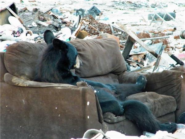 Nhiều khi chán đời muốn nằm lăn ra sô pha ngủ một giấc cho xong.