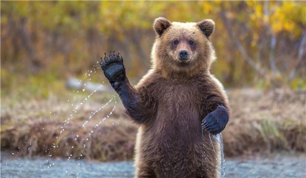 Chào mọi người em là hoa hậu gấu nâu thân thiện đáng yêu.