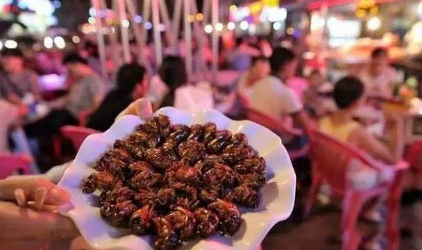 Không chỉ vậy, ve sầu cũng là món ăn của một số khách sạn năm sao cao cấp do các đầu bếp nổi tiếng chế biến ra.