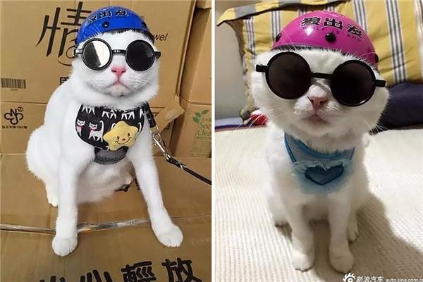 Chú mèo sở hữu loạt mũ bảo hiểm mini cùng phụ kiện sành điệu không kém gì dân chơi.